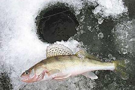 Секреты зимней рыбалки: ловля на «Чёртика»